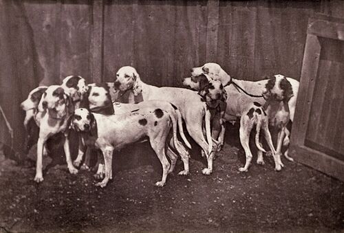 """[Dogs], mid - late 19th century"" Albumen silver print by Léon Crémière (French, 1831 - after 1882) (courtesy of 
