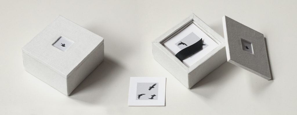 From the series Box of Birds, 2016 by Wesley Stringer (courtesy of the artist).