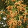 花粉症にならない人のヤバい特徴と発症原因とならないために対策は?