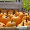 ハロウィンのかぼちゃのくりぬき方とジャックオランタンの作り方