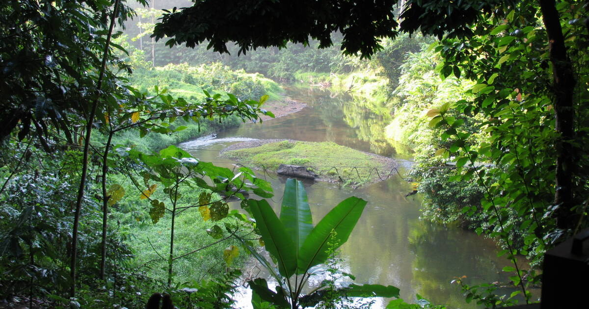 tropical rain forests are most often located near the earth's equator. Unesco World Heritage Centre State Of Conservation Soc 2014 Tropical Rainforest Heritage Of Sumatra Indonesia