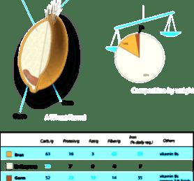 Wheat Endosperm,Bran and Wheat Germ Nutrition