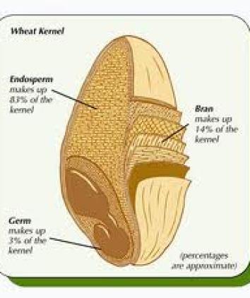 Wheat germ internal