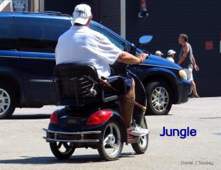 Jungle_5658