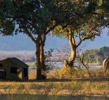 An elephant exploring the area around the group's camping tent in Africa