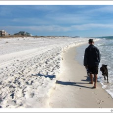 Paw Friendly on the Panhandle Coast?