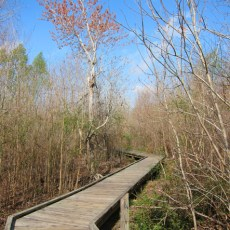 SP Campground Review – Bayou Segnette State Park, New Orleans, LA