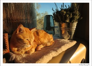 Taggart enjoys some afternoon warmth