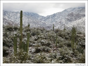 Morning in the Catalina Mountains