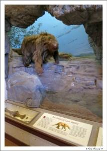 Replica of the Shasta Sloth