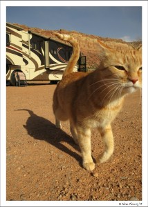 Cat on the move...