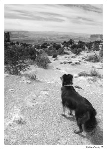 Polly on the trail