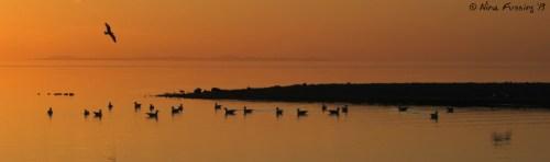 Birds flutter in the setting sun