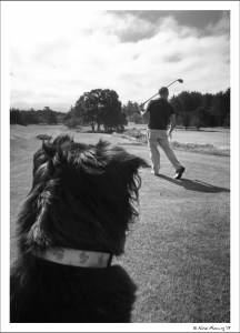 Polly rates the drive, giving it an 8.5 for doggie interest.