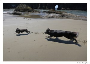 Polly & Sissy (Gunta's pooch) play on the beach