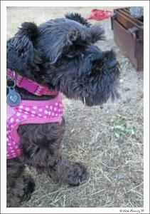 Their doggie Emmi is a CUTIE!