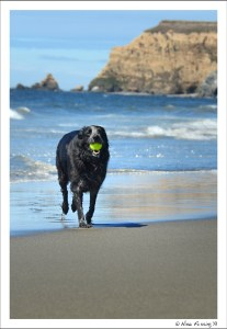 The beach here is doggie heaven!