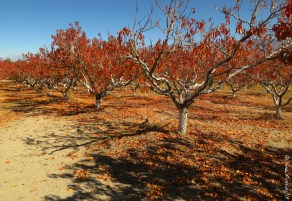 The gorgeous fall grounds at Apple Hill Farm