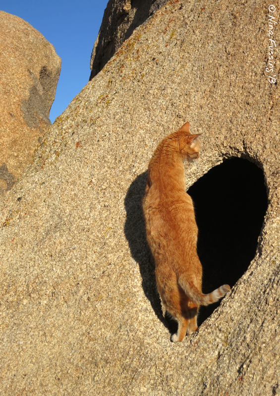 The cats are having a blast climbing the rocks