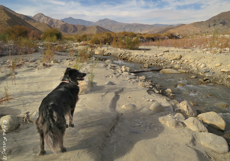 A river in the desert!!