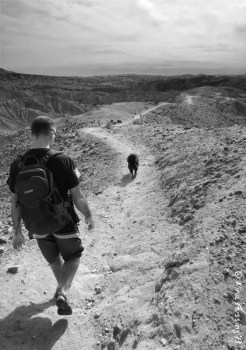 5 great dogfriendly hikes in palm springs/desert hot