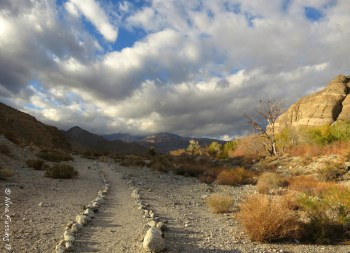 The gorgeous trail at Whitewater Preserve