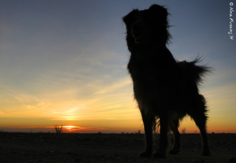 Doggie silhouette at sunset