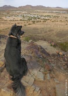 Polly on Q Mountain