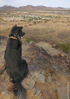 Polly on Q Mountain