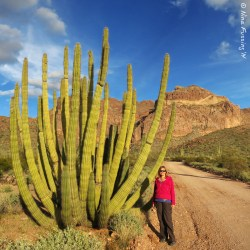 Your truly by one of the gorgeous organ pipe
