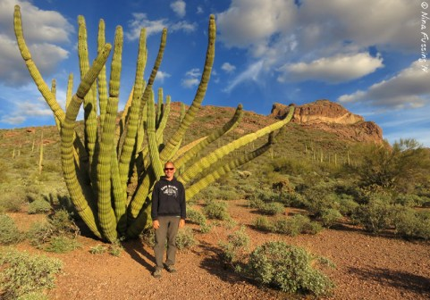 Paul poses by a crested organ pipe