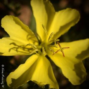 Gorgeous yellow