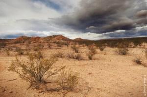Desert weather....finally!