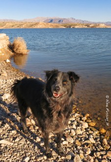 Doggie gets ready for an icy-cold swim!