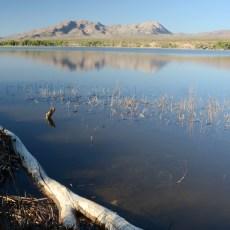 Free Campground Review – Pahranagat National Wildlife Refuge, Alamo, NV