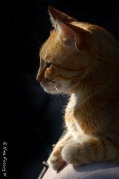 Cat in silhouette