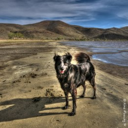 Playing around with my new software. Polly by Washoe Lake