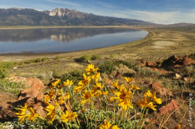 Wildflowers and Washoe Lake