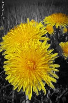 Brilliant weeds