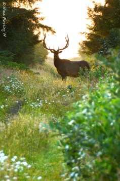 The magnificent buck that crossed our path