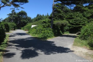 View down sunny front (beach-side) section of A-loop. Site A20 on right, A17 behind it. Sites on left have beach views.