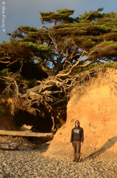 Tree Root Cave is a popular photo op at Kalaloch