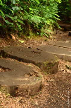 Log trail at Cape Flattery