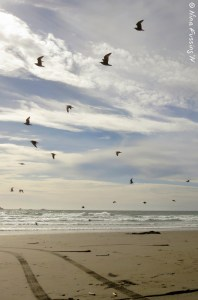 A flight of birds splits the view