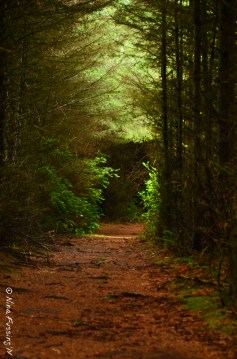 The deep & silent forest of the Cape