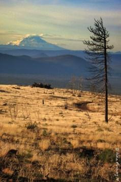 Mount Shasta glows in afternoon light