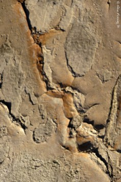 Textures of the lake bed I