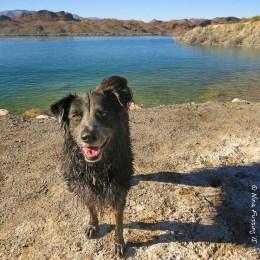 A wet doggie is a happy doggie