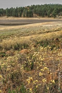 A few meadow weeds