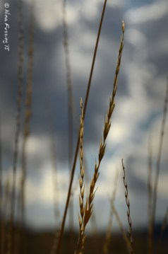High Mountain Weeds
